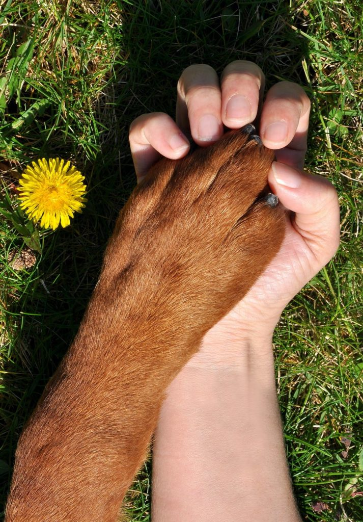 Image of a dogs paw in a persons hand